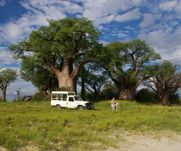 Luxury Accommodated Guided Mobile Safari