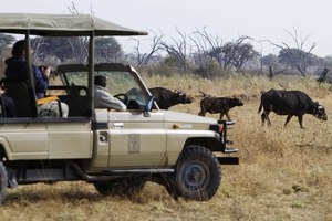 Game drives at Savute Safari Lodge