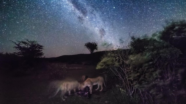 Art of Night Africa Photography Tour video